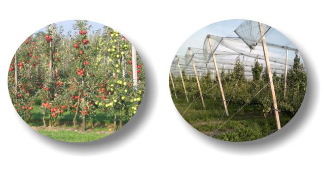 FILO DRUT Drut sadowniczy i ogrodniczy - obrazek 2