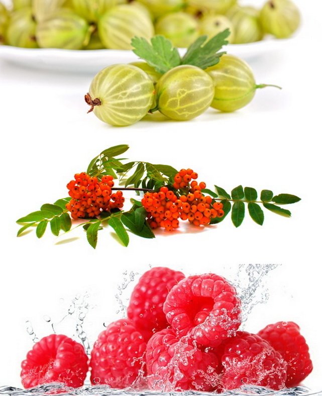 POL-OWOC Przetwórnia Owoców i Warzyw - obrazek 1